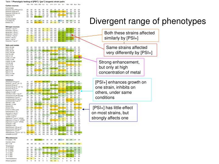 Divergent range of phenotypes