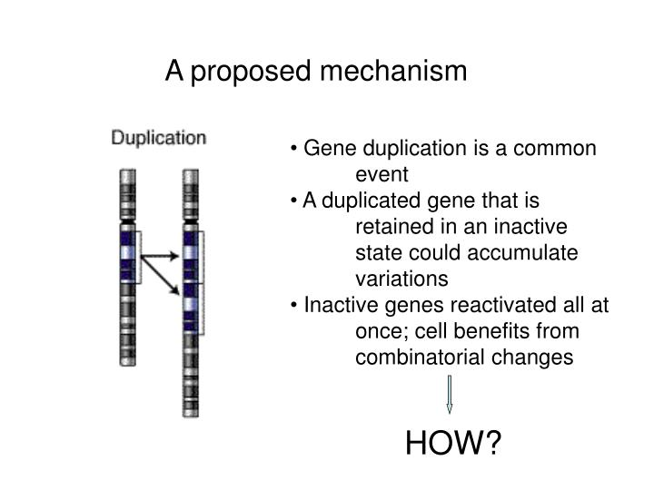 A proposed mechanism