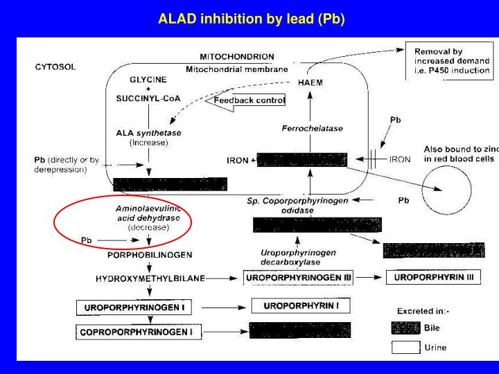 ALAD inhibition b