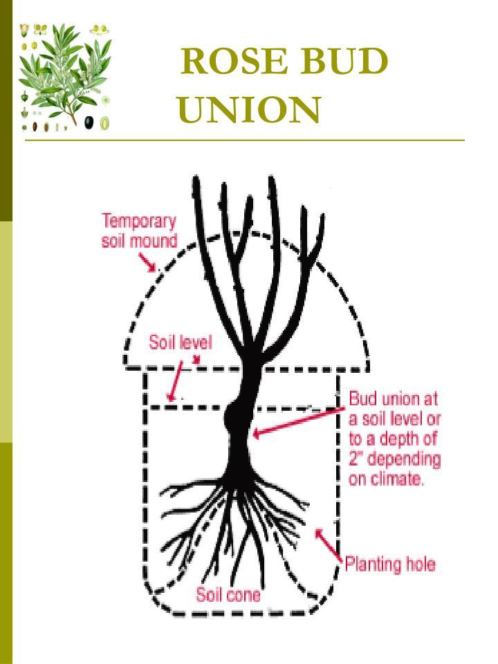 Planting seeds no 3 - 2 5