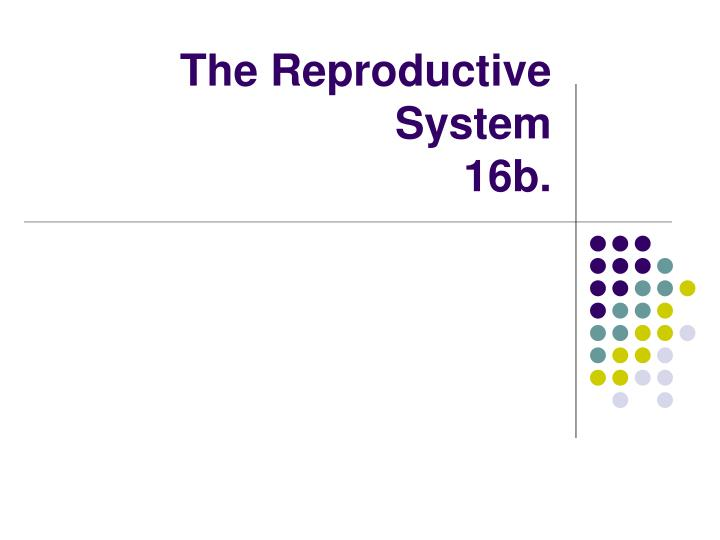 the reproductive system 16b n.