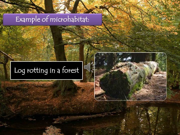 Example of microhabitat:
