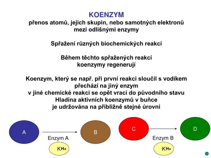 KOENZYM