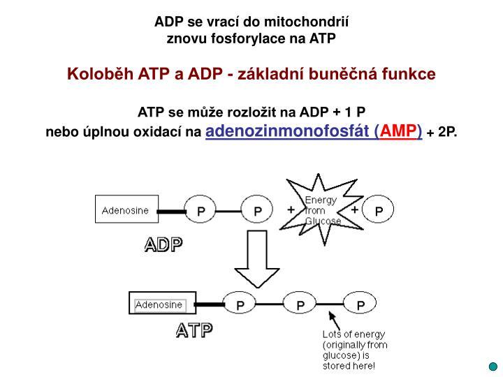 ADP se vrací do mitochondrií
