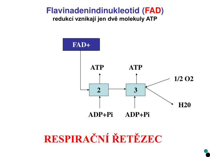 Flavinadenindinukleotid (