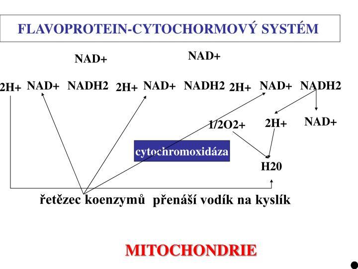 FLAVOPROTEIN-CYTOCHORMOVÝ SYSTÉM
