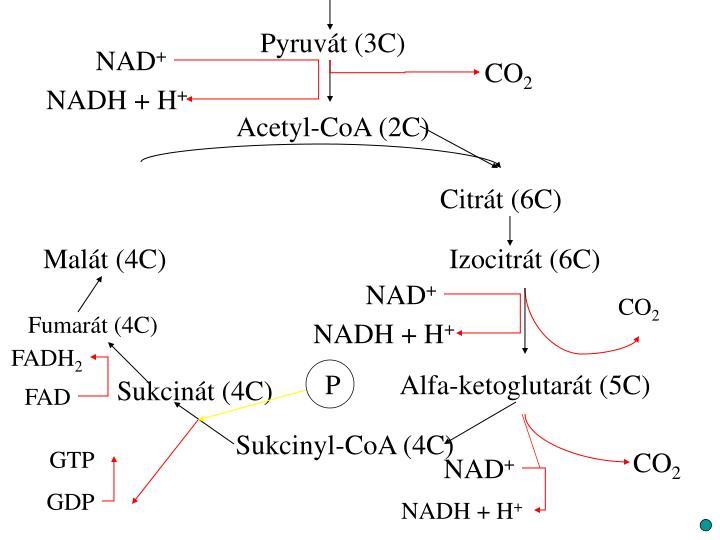 Pyruvát (3C)