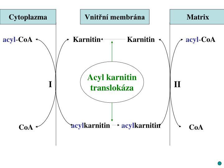 Cytoplazma