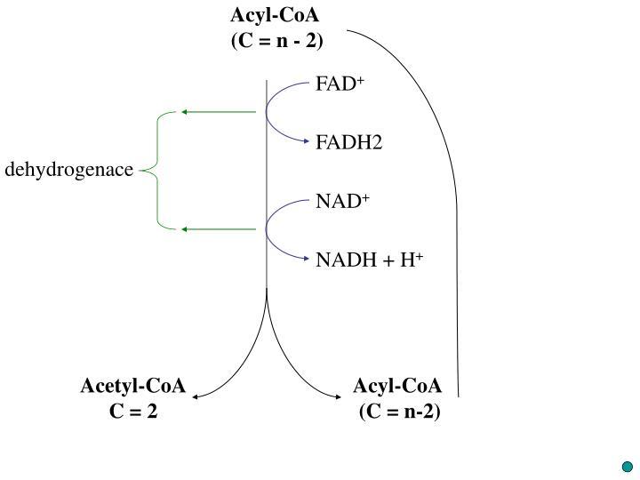Acyl-CoA
