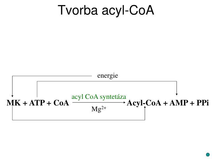Tvorba acyl-CoA