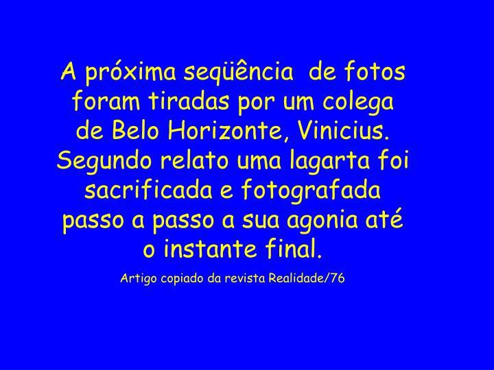 A próxima seqüência  de fotos foram tiradas por um colega de Belo Horizonte, Vinicius. Segundo relato uma lagarta foi sacrificada e fotografada passo a passo a sua agonia até o instante final.