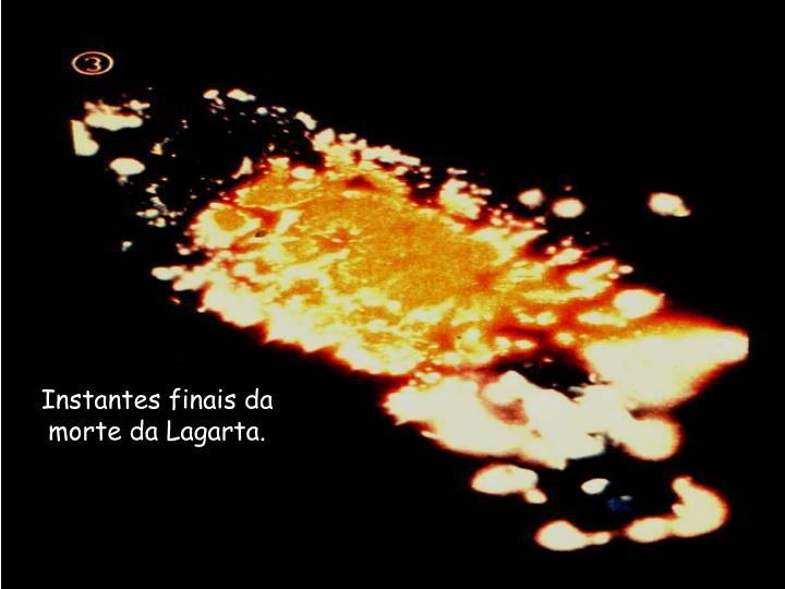 Instantes finais da morte da Lagarta.