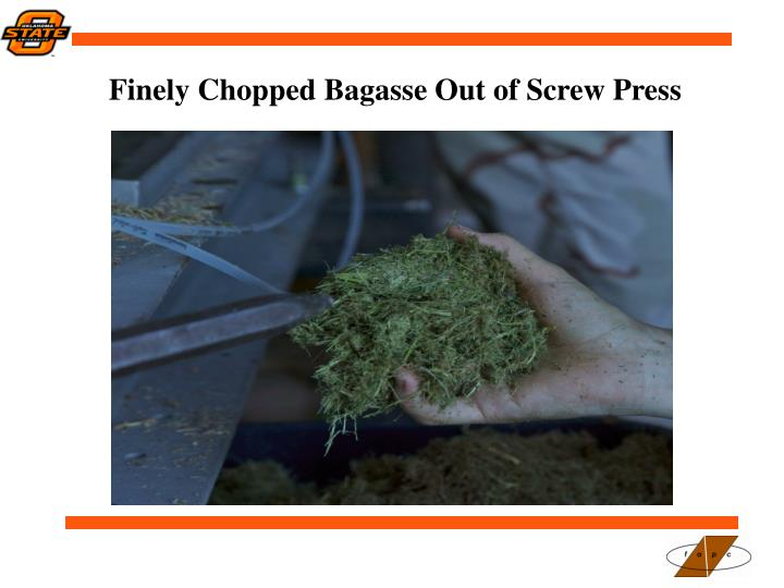 Finely Chopped Bagasse Out of Screw Press