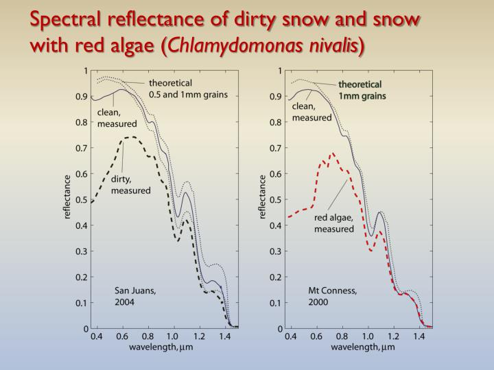Spectral reflectance of dirty snow and snow with red algae (