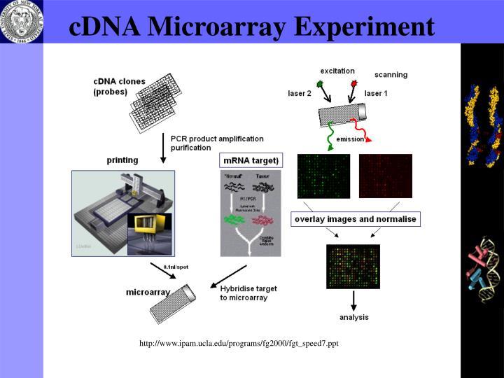 Cdna microarray experiment
