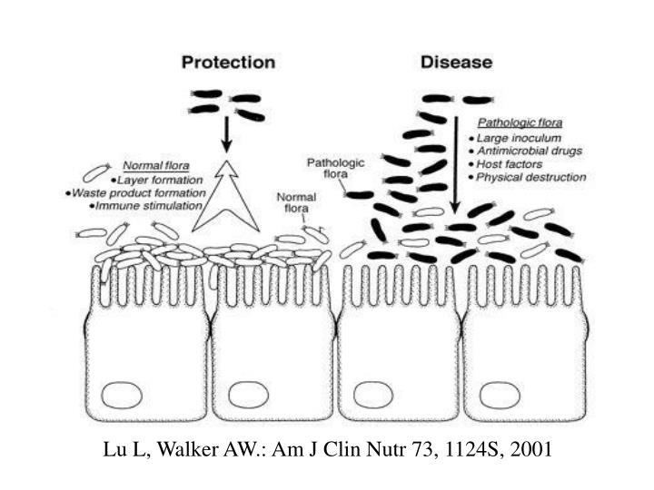 Lu L, Walker AW.: Am J Clin Nutr 73, 1124S, 2001