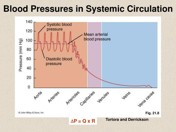 Blood Pressures in Systemic Circulation