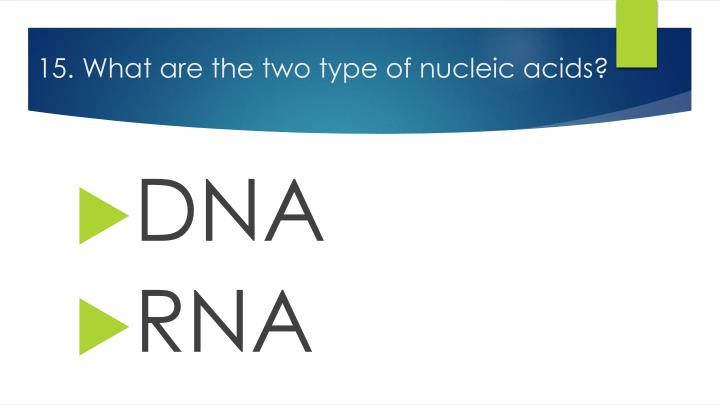 15. What are the two type of nucleic acids?