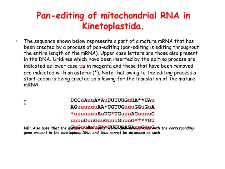 Pan-editing of mitochondrial RNA in Kinetoplastida.