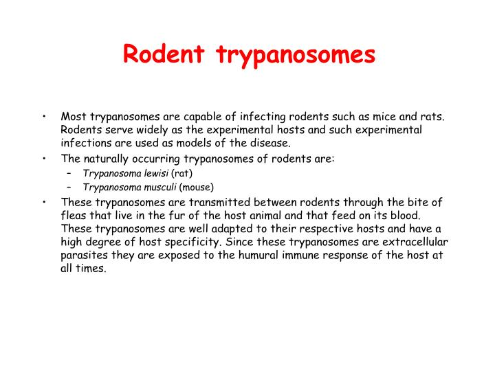Rodent trypanosomes