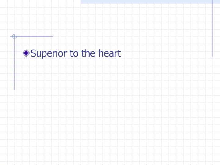 Superior to the heart