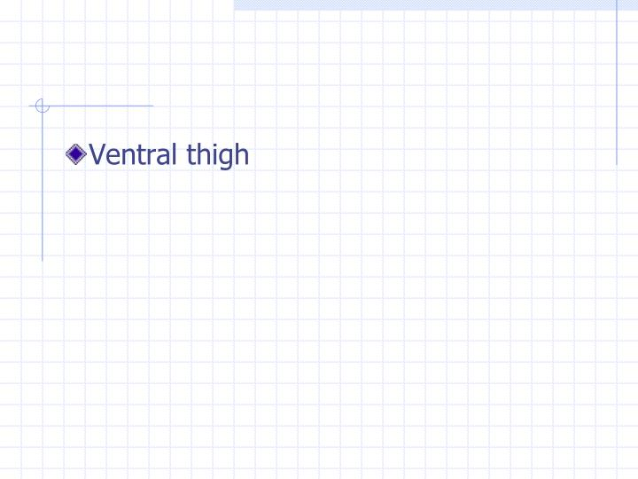 Ventral thigh