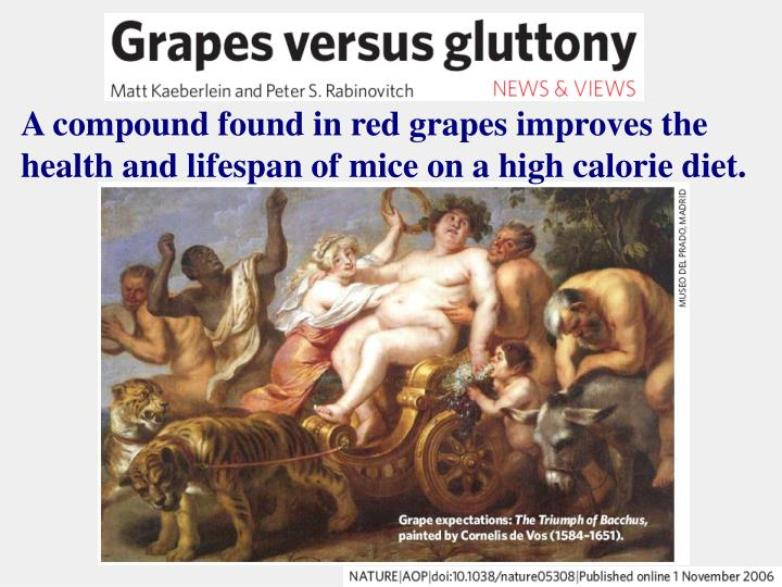 A compound found in red grapes improves the health and lifespan of mice on a high calorie diet.