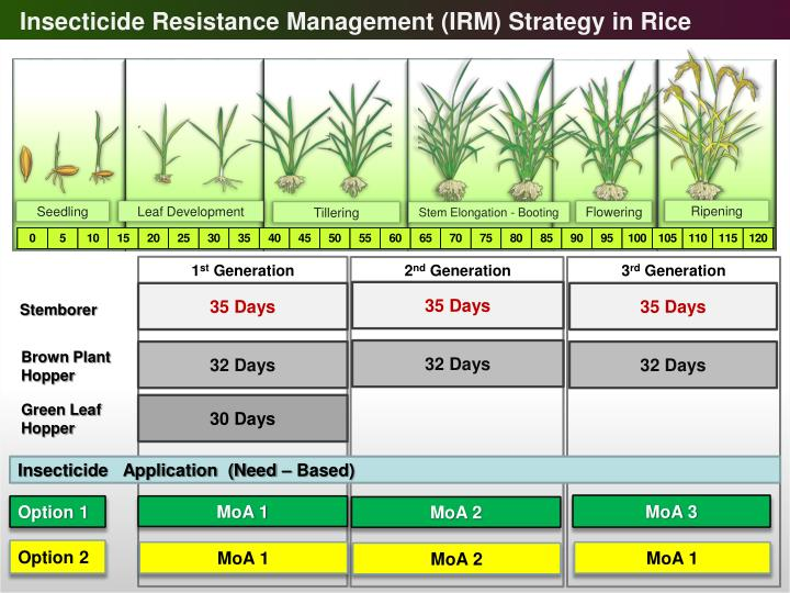 Insecticide Resistance Management (IRM) Strategy in Rice