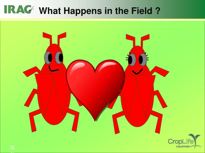 What Happens in the Field ?