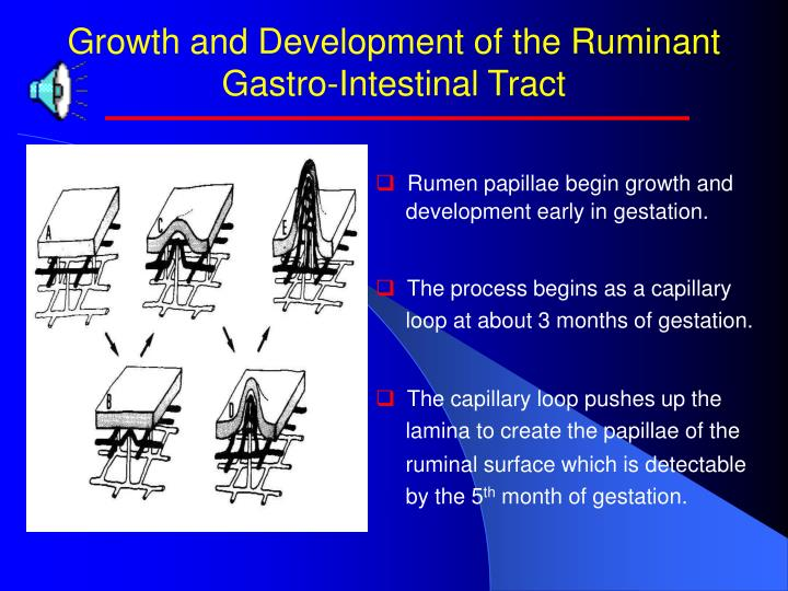 Growth and Development of the Ruminant Gastro-Intestinal Tract