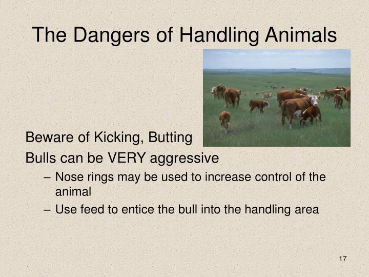 The Dangers of Handling Animals