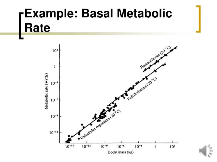 an essay on metabolism and metabolic rate Ectothermic and endothermic metabolism comparing ectothermic and endothermic metabolism metabolism rate definition the amount of energy liberated or expended in a given unit of time.