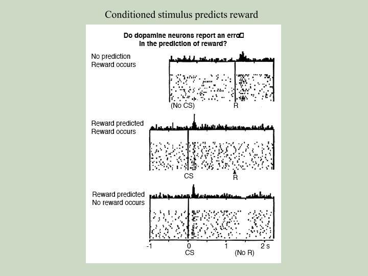 Conditioned stimulus predicts reward