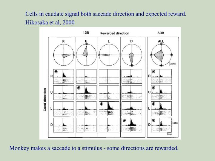 Cells in caudate signal both saccade direction and expected reward.