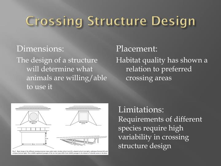 Crossing Structure Design