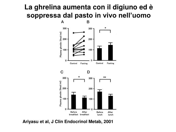 La ghrelina aumenta con il digiuno ed è soppressa dal pasto in vivo nell'uomo