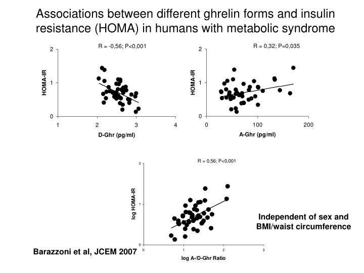 Associations between different ghrelin forms and insulin resistance (HOMA) in humans with metabolic syndrome