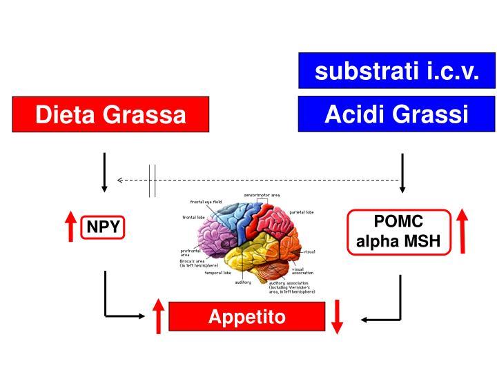 substrati i.c.v.
