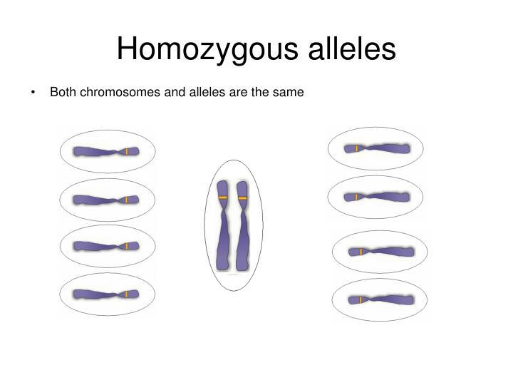 Homozygous alleles