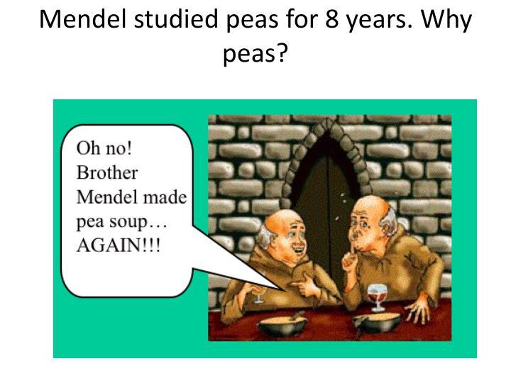 Mendel studied peas for 8 years. Why peas?