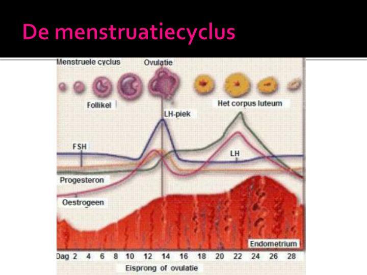 De menstruatiecyclus1