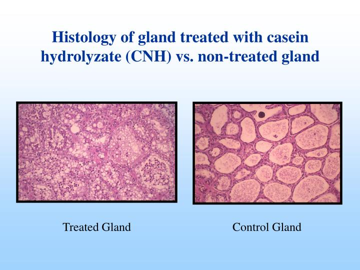 Treated Gland