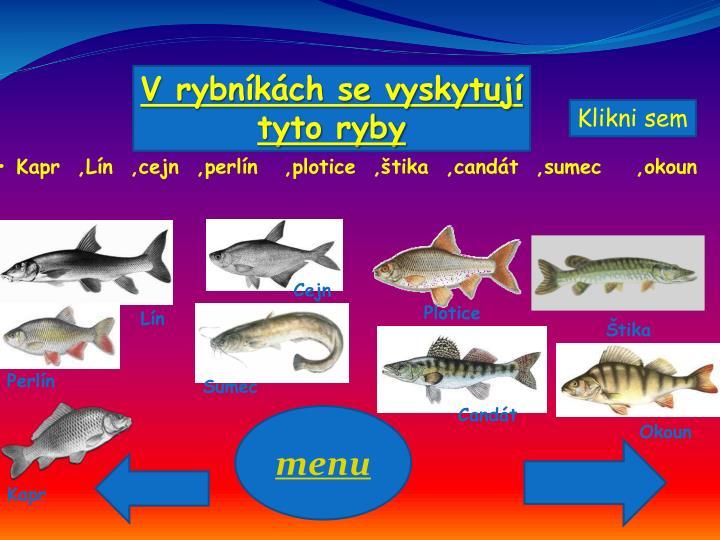 V rybníkách se vyskytují tyto ryby