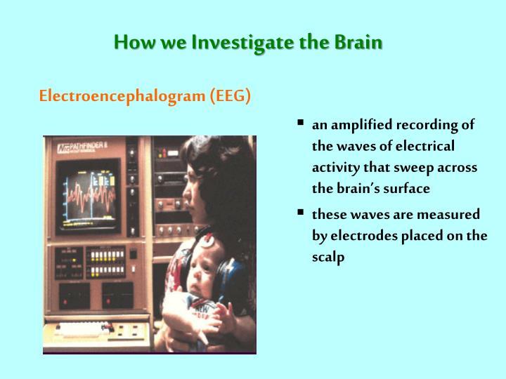 How we Investigate the Brain