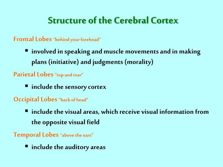 Structure of the Cerebral Cortex