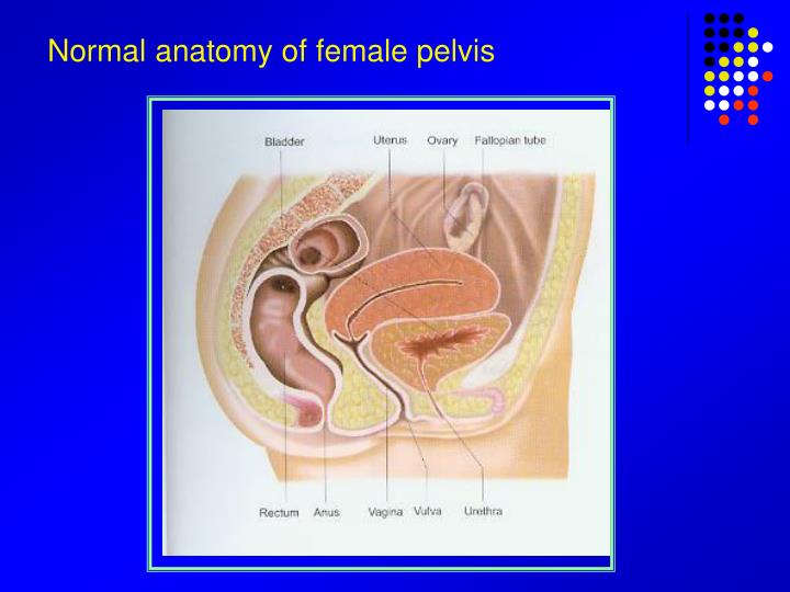 Ppt Normal Anatomy Of Female Pelvis Powerpoint Presentation Id
