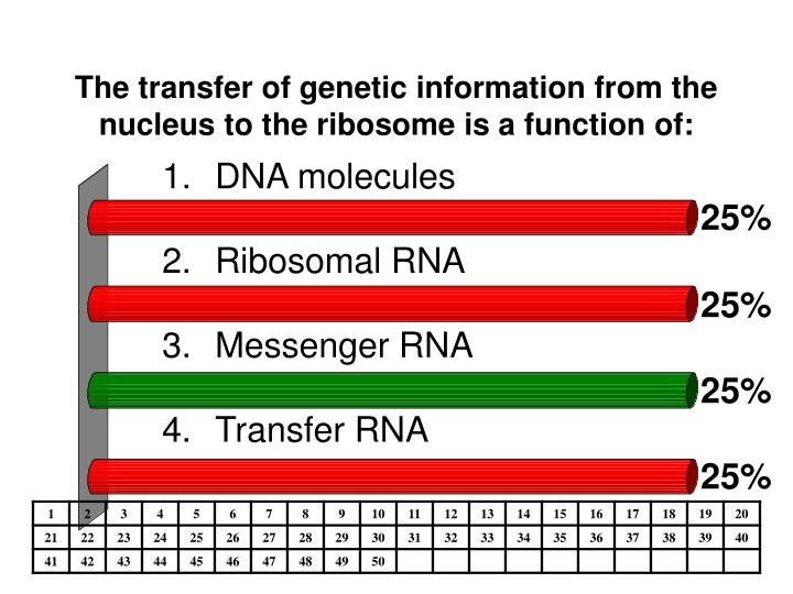 The transfer of genetic information from the nucleus to the ribosome is a function of