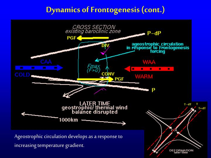 Dynamics of Frontogenesis (cont.)