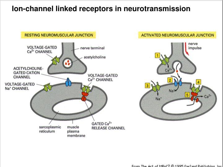Ion-channel linked receptors in neurotransmission