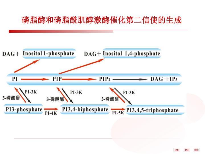 磷脂酶和磷脂酰肌醇激酶催化第二信使的生成